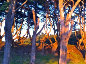 Sunset Light at Lands End